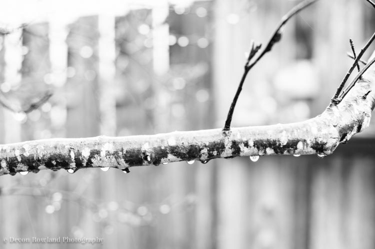 04.07_rainy_day_2014_Apr07_6474