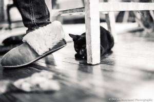 11.18_kitten_2014_Nov17_3177